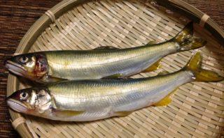 鮎料理の6パターン!(おまけ付)日本の旬を食べ尽くす